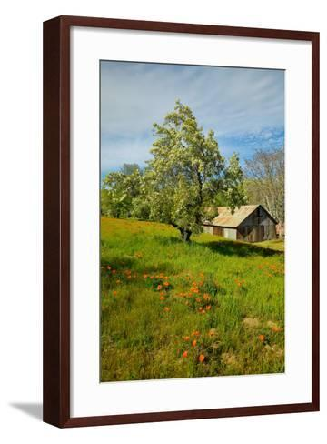 Old barn next to a colorful bouquet of spring flowers and California Poppies near Lake Hughes, CA--Framed Art Print