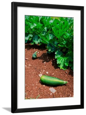 Vegetable garden at Thomas Jefferson's Monticello in Charlottesville Virginia--Framed Art Print