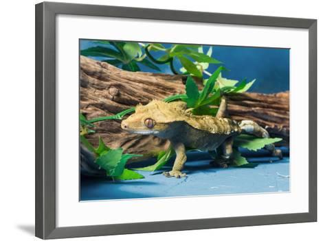 Close-up of Gecko lizard--Framed Art Print