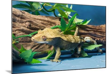 Close-up of Gecko lizard--Mounted Photographic Print