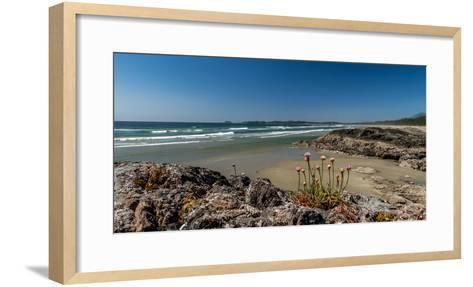 Sea pink (Armeria maritima) wildflowers on Long Beach, Pacific Rim National Park Reserve, Vancou...--Framed Art Print