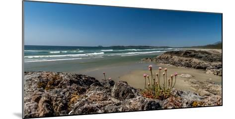 Sea pink (Armeria maritima) wildflowers on Long Beach, Pacific Rim National Park Reserve, Vancou...--Mounted Photographic Print