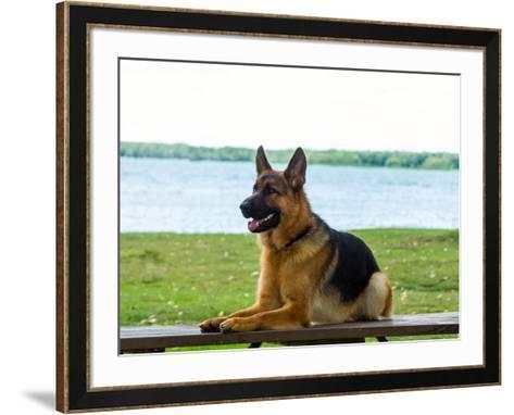 German shepherd dog sitting by river--Framed Art Print