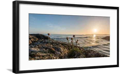Sea pink (Armeria maritima) wildflowers on Long Beach, Pacific Rim National Park Reserve, Vancou...--Framed Art Print