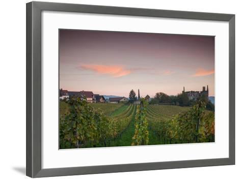 Vineyards in autumn at dusk, Kaiserstuhl, Burkheim, Baden-Wurttemberg, Germany--Framed Art Print