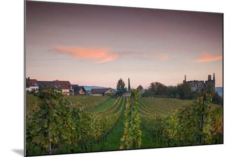 Vineyards in autumn at dusk, Kaiserstuhl, Burkheim, Baden-Wurttemberg, Germany--Mounted Photographic Print
