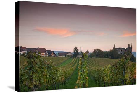 Vineyards in autumn at dusk, Kaiserstuhl, Burkheim, Baden-Wurttemberg, Germany--Stretched Canvas Print