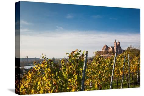 St. Stephansmunster cathedral from vineyard, Breisach, Black Forest, Baden-Wurttemberg, Germany--Stretched Canvas Print