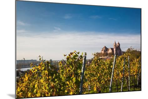 St. Stephansmunster cathedral from vineyard, Breisach, Black Forest, Baden-Wurttemberg, Germany--Mounted Photographic Print