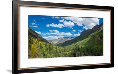 Elevated view of trees on landscape along Country Road 361, Camp Bird Road, San Juan Mountains,...--Framed Art Print