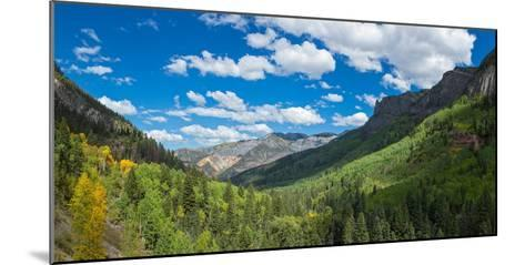 Elevated view of trees on landscape along Country Road 361, Camp Bird Road, San Juan Mountains,...--Mounted Photographic Print