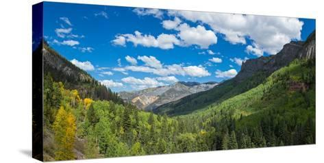 Elevated view of trees on landscape along Country Road 361, Camp Bird Road, San Juan Mountains,...--Stretched Canvas Print