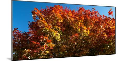 Trees in autumn, Bath, Sagadahoc County, Maine, USA--Mounted Photographic Print