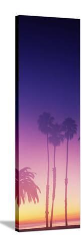 Silhouette of palm trees on beach during fog at sunset, Santa Barbara, California, USA--Stretched Canvas Print