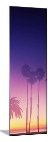 Silhouette of palm trees on beach during fog at sunset, Santa Barbara, California, USA--Mounted Photographic Print