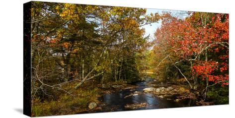 View of stream in fall colors, Maine, USA--Stretched Canvas Print
