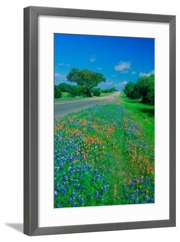 Field of bluebonnets in bloom Spring Willow City Loop Rd. TX--Framed Art Print