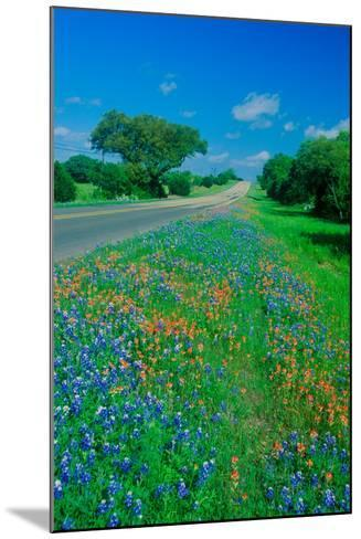 Field of bluebonnets in bloom Spring Willow City Loop Rd. TX--Mounted Photographic Print