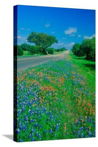 Field of bluebonnets in bloom Spring Willow City Loop Rd. TX--Stretched Canvas Print