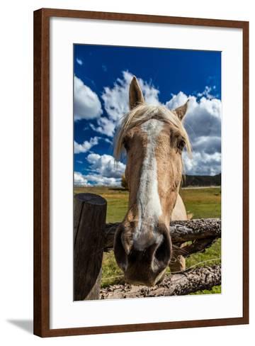 OCTOBER 1, 2016 - Close up horse snoot, near Ridgway, Colorado - just off Log Hill--Framed Art Print