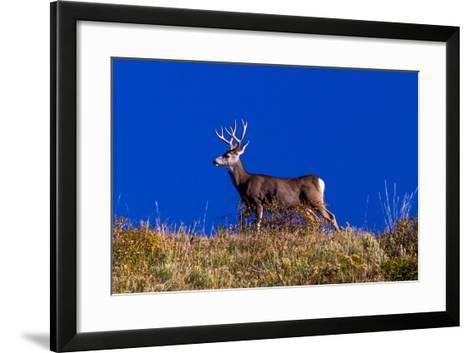 Deer and Blue Sky outside of Ridgway, Colorado--Framed Art Print