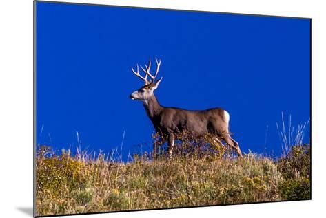 Deer and Blue Sky outside of Ridgway, Colorado--Mounted Photographic Print