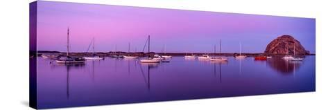 Boats moored at a harbor, Morro Bay Harbour, Morro Bay, California, USA--Stretched Canvas Print
