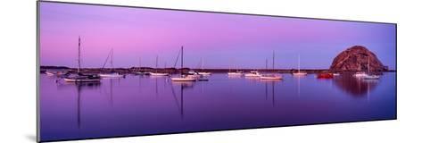 Boats moored at a harbor, Morro Bay Harbour, Morro Bay, California, USA--Mounted Photographic Print
