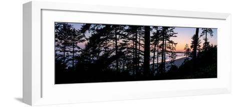 Sitka Spruce trees on Long Beach at sunset, Vancouver Island--Framed Art Print