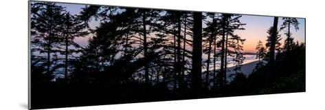 Sitka Spruce trees on Long Beach at sunset, Vancouver Island--Mounted Photographic Print