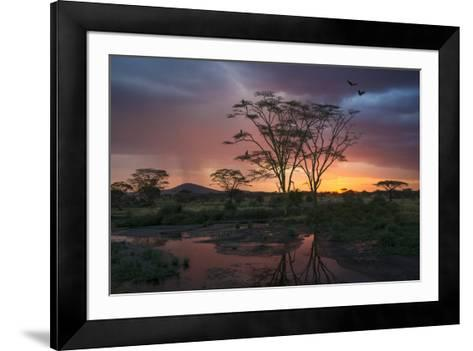 Africa. Tanzania. Sunset lights up a flock of Marabou storks in a marsh, Serengeti National Park.-Ralph H^ Bendjebar-Framed Art Print