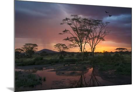 Africa. Tanzania. Sunset lights up a flock of Marabou storks in a marsh, Serengeti National Park.-Ralph H^ Bendjebar-Mounted Photographic Print