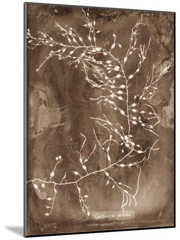 Natural Forms Sepia 2-THE Studio-Mounted Premium Giclee Print