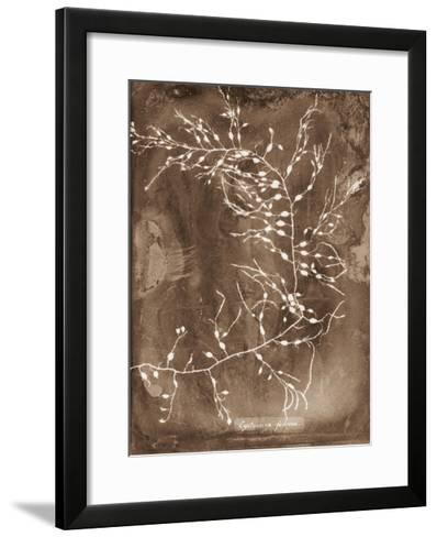 Natural Forms Sepia 2-THE Studio-Framed Art Print