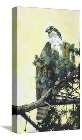 Osprey-Max Hayslette-Stretched Canvas Print