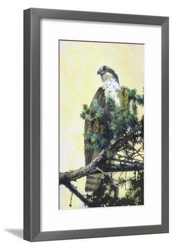 Osprey-Max Hayslette-Framed Art Print