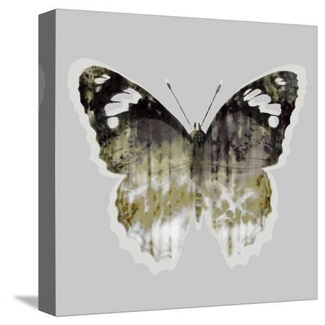 Painted Butterfly 1-THE Studio-Stretched Canvas Print