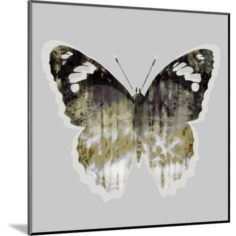 Painted Butterfly 1-THE Studio-Mounted Premium Giclee Print