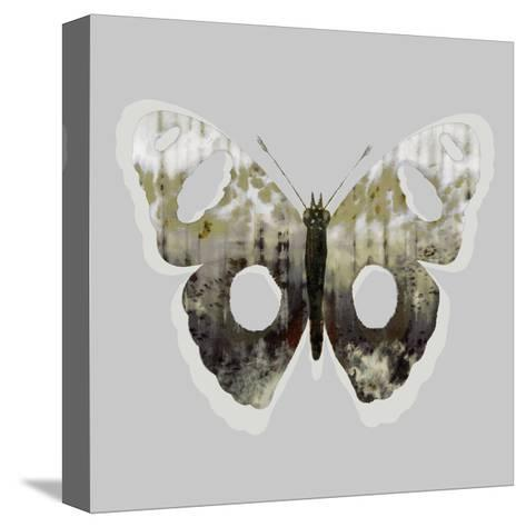 Painted Butterfly 2-THE Studio-Stretched Canvas Print