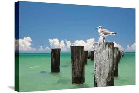 Welcome to Naples, Florida-Verne Varona-Stretched Canvas Print