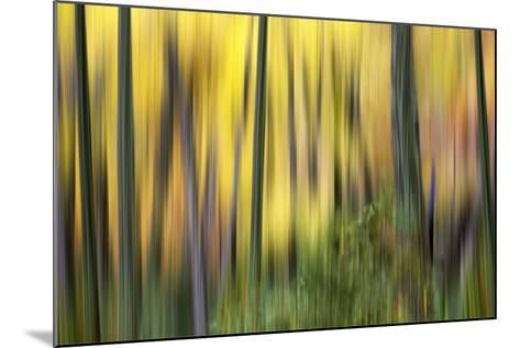 Forest Run II-James McLoughlin-Mounted Photographic Print