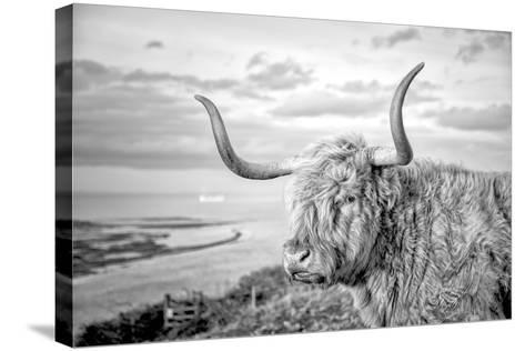 Highland Cows IV-Joe Reynolds-Stretched Canvas Print