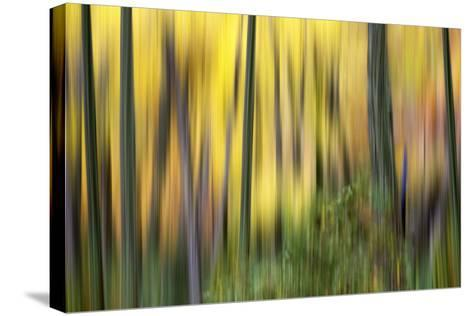 Forest Run II-James McLoughlin-Stretched Canvas Print