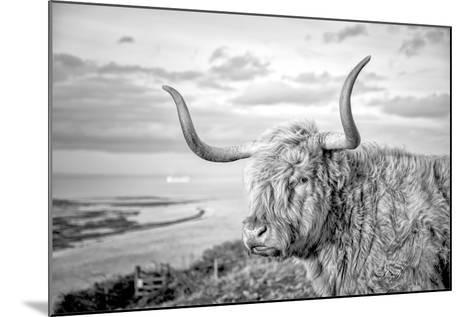 Highland Cows IV-Joe Reynolds-Mounted Photographic Print