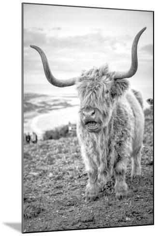 Highland Cows VI-Joe Reynolds-Mounted Photographic Print
