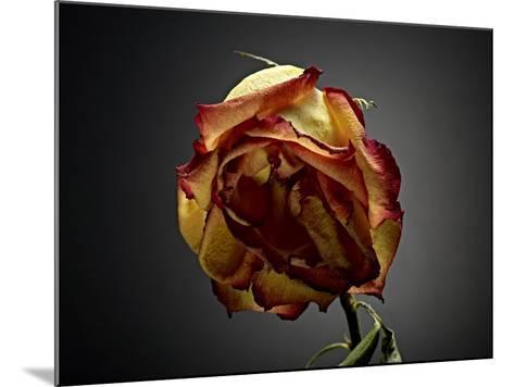 Studio Flowers VI-James McLoughlin-Mounted Photographic Print