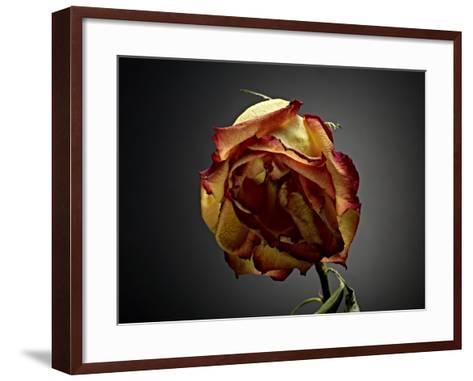 Studio Flowers VI-James McLoughlin-Framed Art Print
