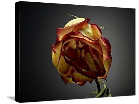 Studio Flowers VI-James McLoughlin-Stretched Canvas Print