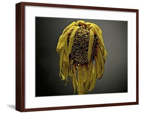 Studio Flowers VII-James McLoughlin-Framed Art Print