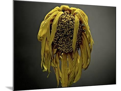 Studio Flowers VII-James McLoughlin-Mounted Photographic Print